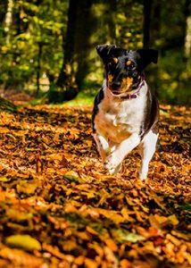 Dierenarts hond herfst